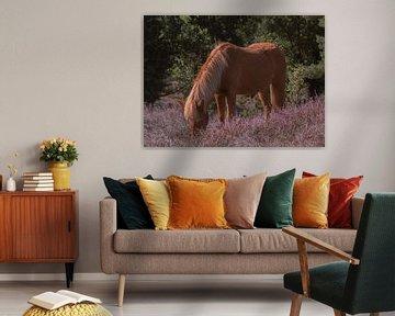 Pony zwischen den lila Mooren von PPS Fotografie
