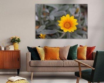 Gelbe Blume von Fanny N