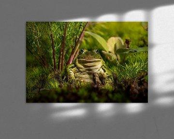 Frosch von Raymond Engelen