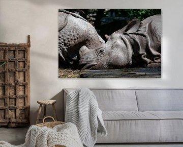 Schlafende Riesen von Lianne van Dijk