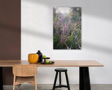 Spätblühende Heide auf der Posbank, Veluwesaum von Mischa Verhoeven