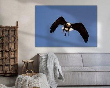 Fliegender Adler von Quint Wijnhoven