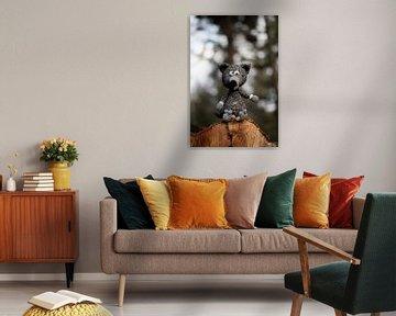 Wolf im Wald von Anne Van Opdorp