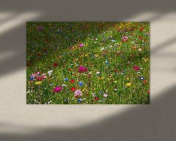 Bunte Blumenwiese von Reiner Würz / RWFotoArt