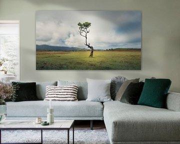 Een boom uit duizenden van Raynaud Ritsma