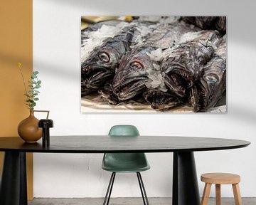 Vissen van Hans Verhulst