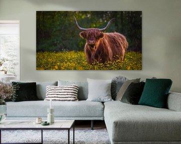Schotse Hooglander tussen de boterbloemen van Raynaud Ritsma