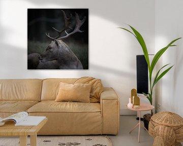 Jagdporträt eines Damhirsches von Geert van Kuyck