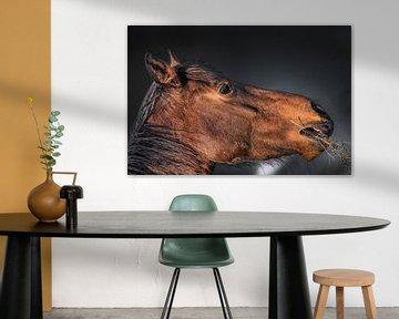 Pferd frisst Gras im Abendlicht mit dunklem Hintergrund von Harrie Muis