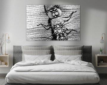 Libelle von Dominique van Ojik