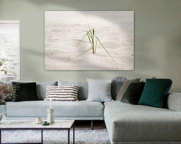Strandgras in de zeewind van Ralf Lehmann
