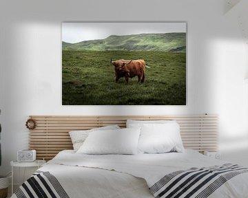 Iconische Schotse hooglander van Ken Costers
