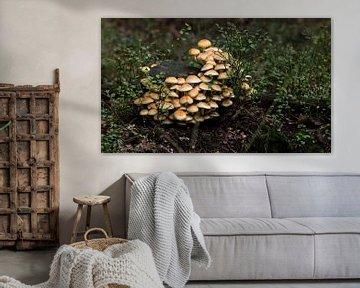groep paddenstoelen in het bos tijdens de herfst op de veluwe