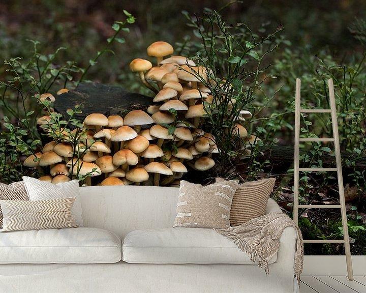 Impression: groupe de champignons dans la forêt pendant l'automne sur le veluwe sur ChrisWillemsen