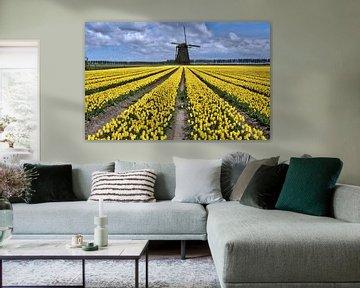 nederlands tulpenveld met gele tulpen en windmolen van Compuinfoto .