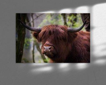 Portret van Schotse Hooglander van Mario Brussé Fotografie