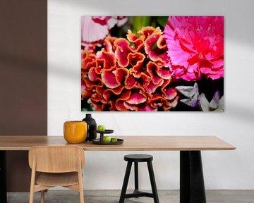 Nelke und Korallenblume, rosa und gelb von C. Catharina