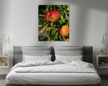 Pommes prêtes à cueillir sur Michel Knikker