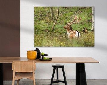 Hirsch im Wald, Herbst von Wendy Tellier - Vastenhouw
