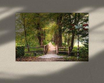 Acacia Herfst Overgang van Joris Pannemans - Loris Photography