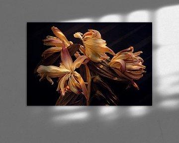 Getrocknete Lilien im warmen Herbstlicht von Karel Ham