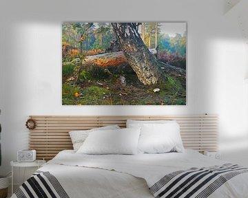 Auch wenn das Holz noch so alt ist wie heute, graben Insekten wie nach Gold. von Arie Visser