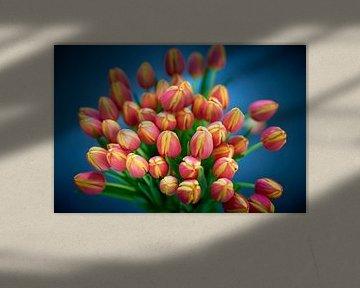 Blumenstrauß aus rot-gelb tanzenden Tulpen in Nahaufnahme von Jenco van Zalk