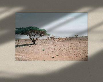 Woestijnsteppe in Marokko van Eline Chiara
