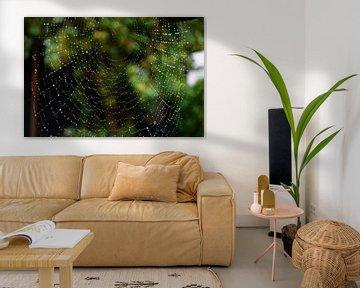 Webdesign door de spin van FotoGraaG Hanneke