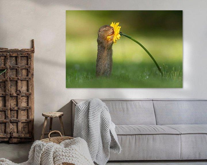 Sfeerimpressie: Eekhoorn ruikt aan bloem van Dick van Duijn