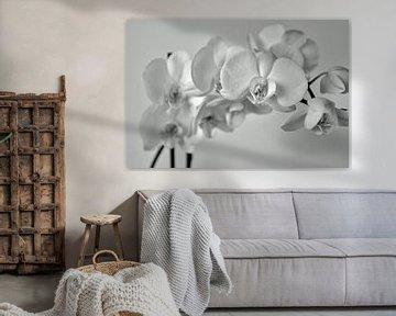 Orchidee von johanna hibma