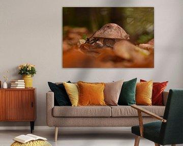 Wulstling im Farbenspiel von Stefan Wiebing Photography