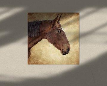 Portret van een bruin paard tegen een bruine achtergrond (kunst) van Art by Jeronimo