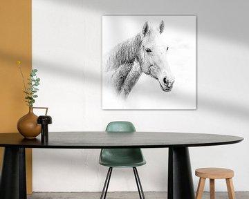 Porträt eines weißen Pferdes auf weißem Hintergrund (Kunst) von Art by Jeronimo