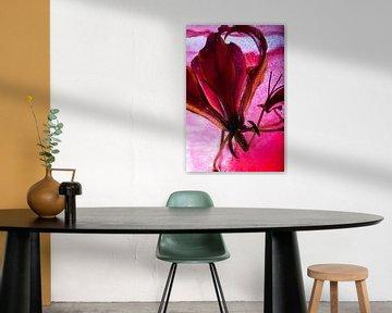 Gloriosa in rotem Eis von Marc Heiligenstein