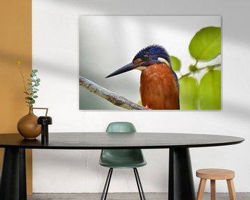 Eisvogel von Martin Jansen