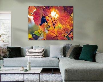 Wijnbladeren in de herfst van Alexander Voss