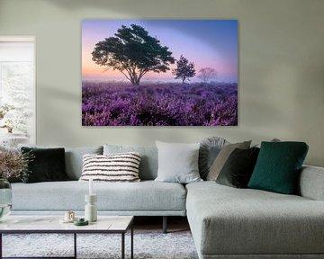 Bäume auf der violetten Heide von Ellen van den Doel