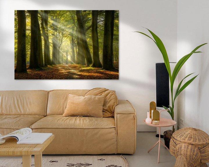 Sfeerimpressie: Zonnestralen in het bos van Ellen van den Doel