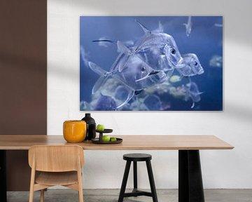 Transparenter Fisch von Mark Bolijn