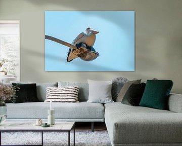 Australischer kühlender Pelikan von Ruben Swart
