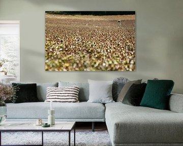 Einsame Sonnenblume auf dem Feld von Ruud Wijnands