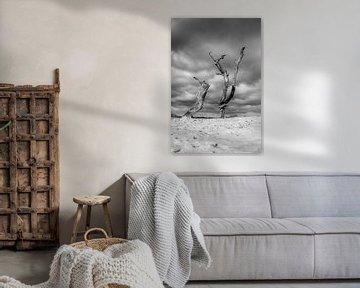 Dode kunst in de duinen van Mark Bolijn