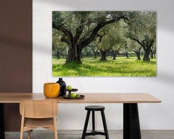 Olijvenboomgaard in Griekenland van Daan Kloeg