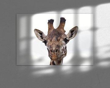 Kop van een giraffe van Bart van Mastrigt