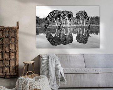 Zebras an einem Trinkbecken von Arjen Heeres