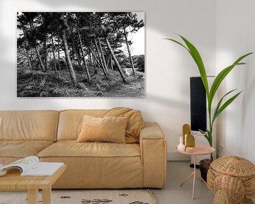 Nadelbäume im Dünengebiet Meijendel von MICHEL WETTSTEIN
