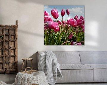 Tulpen von Ton van Waard - Pro-Moois