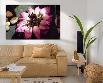 Lotusblüten von Affect Fotografie