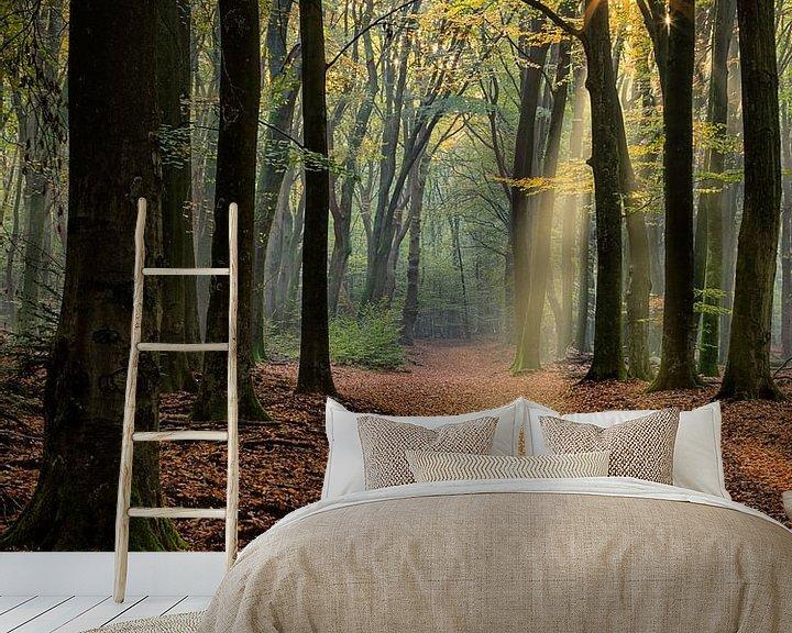 Beispiel fototapete: Lichtshow im Wald von Costas Ganasos